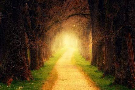 tree-3094982__480.jpg