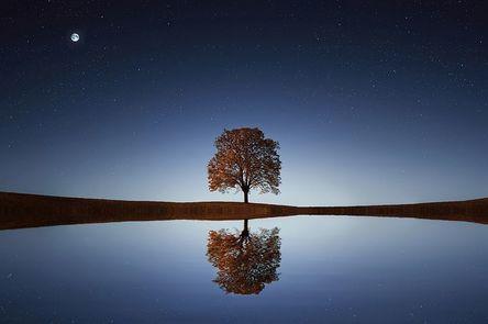 tree-838667__480.jpg