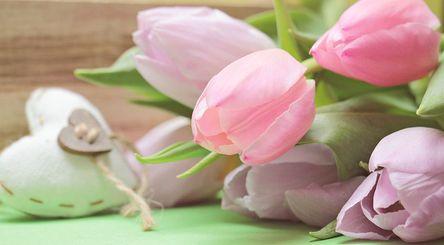 tulips-2167654__480.jpg