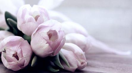 tulips-4072214__480.jpg